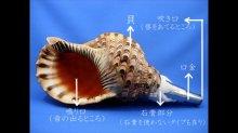 他の写真1: 初心者のための法螺貝の吹き方入門 DVD&テキスト セット