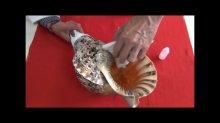 他の写真3: 初心者のための法螺貝の吹き方入門 DVD&テキスト セット
