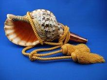 他の写真1: 龍神の法螺貝