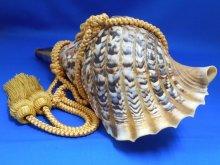 他の写真2: 龍神の法螺貝II