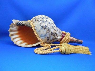 画像1: 龍神の法螺貝II