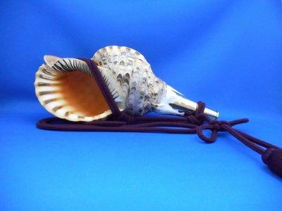 画像1: 修験法螺貝II 雅 黄金の吹口