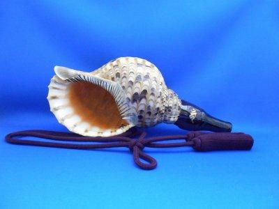 画像1: 新発売 戦国法螺貝 歌口木製法螺貝 軍神 不動明王 梵字入り