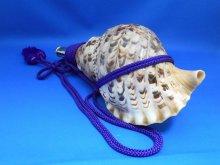 他の写真2: 戦国法螺貝 出陣