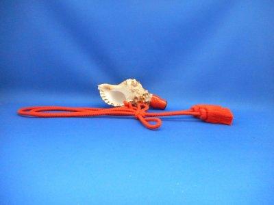 画像1: 新発売 天狗 超ミニ 雅 法螺貝