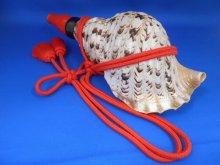 他の写真2: 出羽三山 山伏法螺貝 B級品