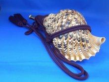 他の写真2: 戦国法螺貝 大名 黄金の法螺貝