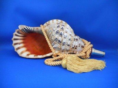 画像1: 源氏の法螺貝II